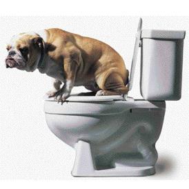 Туалет для собак, лотки